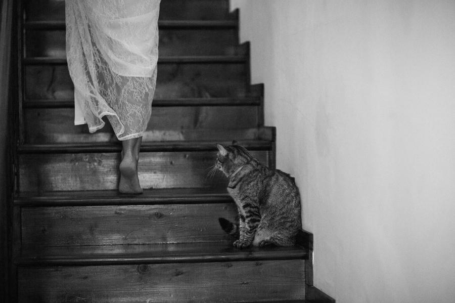 fotograf nunta_Marius Chitu_A+I 001fotograf nunta_Marius Chitu_A+I 008
